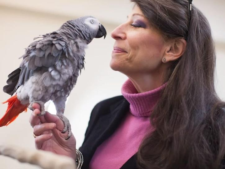 smart parrot defeated harvard undergrads in a memory test