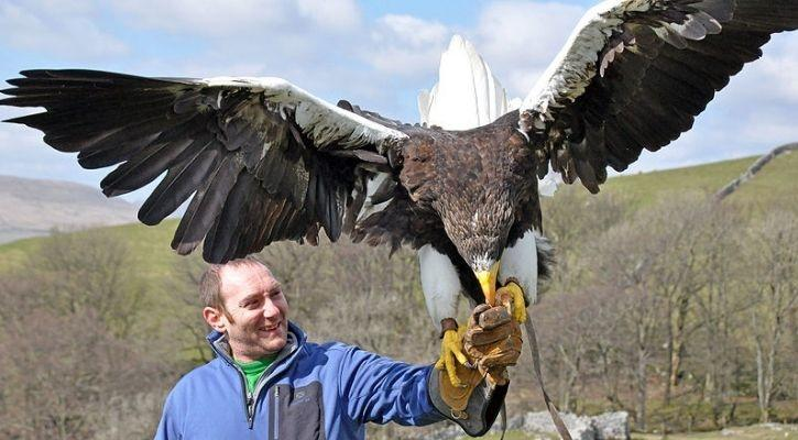 eagle hunting video
