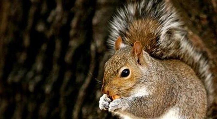 Bubonic plague found in squirrel in Colorado US