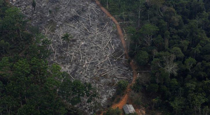 Amazon rainforest deforestation due to rising mercury levels in the soil