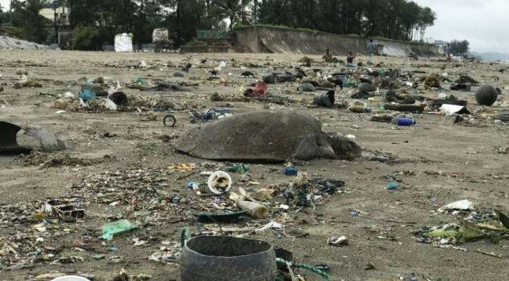 dead turtle on beach of bangladesh surrounded by plastic waste