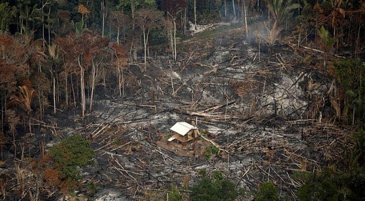 Amazon rainforest maybe slowly dying and we need to act quickly
