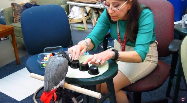 Memory test on parrots