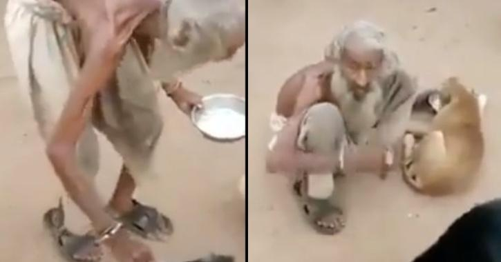 Beggar Feeds Stray Dogs