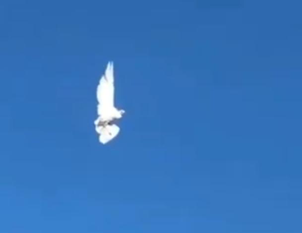Motionless Bird