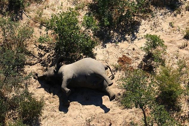 Botswana elephant death
