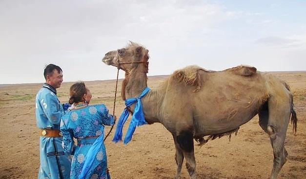 Camel returns to former owners