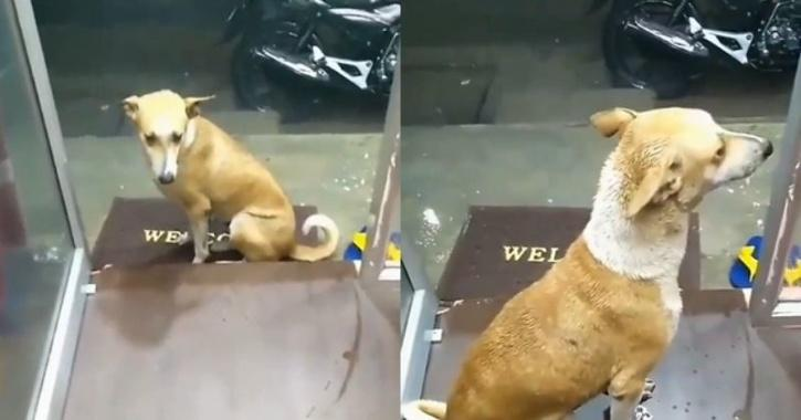Dog given shelter from rain