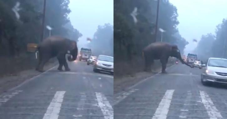 Elephant trying to cross road