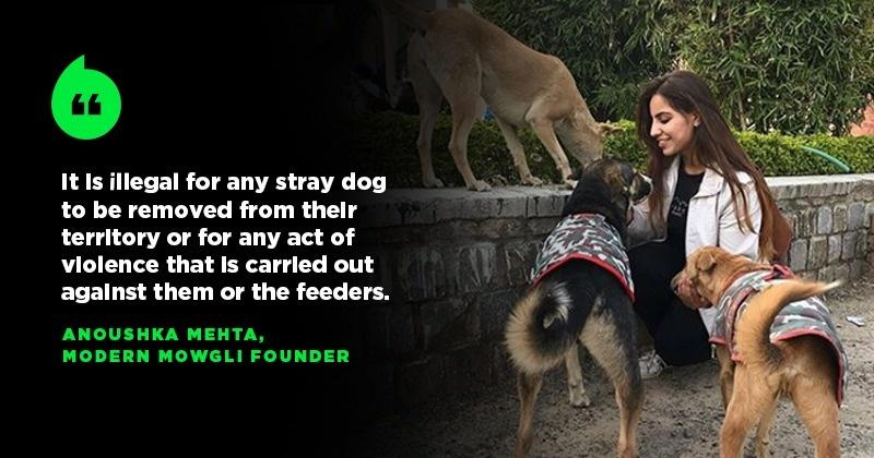 This 23-Year-Old Animal Rescuer Reveals Why Animal Care Is Not A Priority In India - India Times