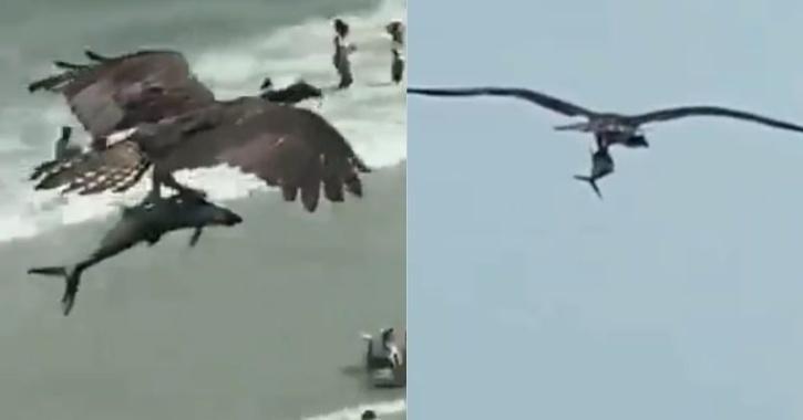 bird catches shark video