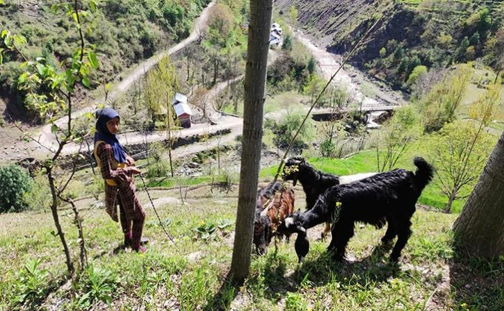 Loc In Kashmir Brings Cheers Among Residents