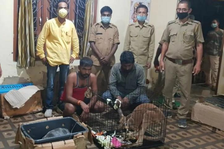 Exotic Animals Smuggled