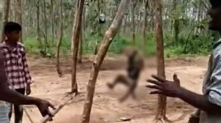 Monkey Hanged To Death