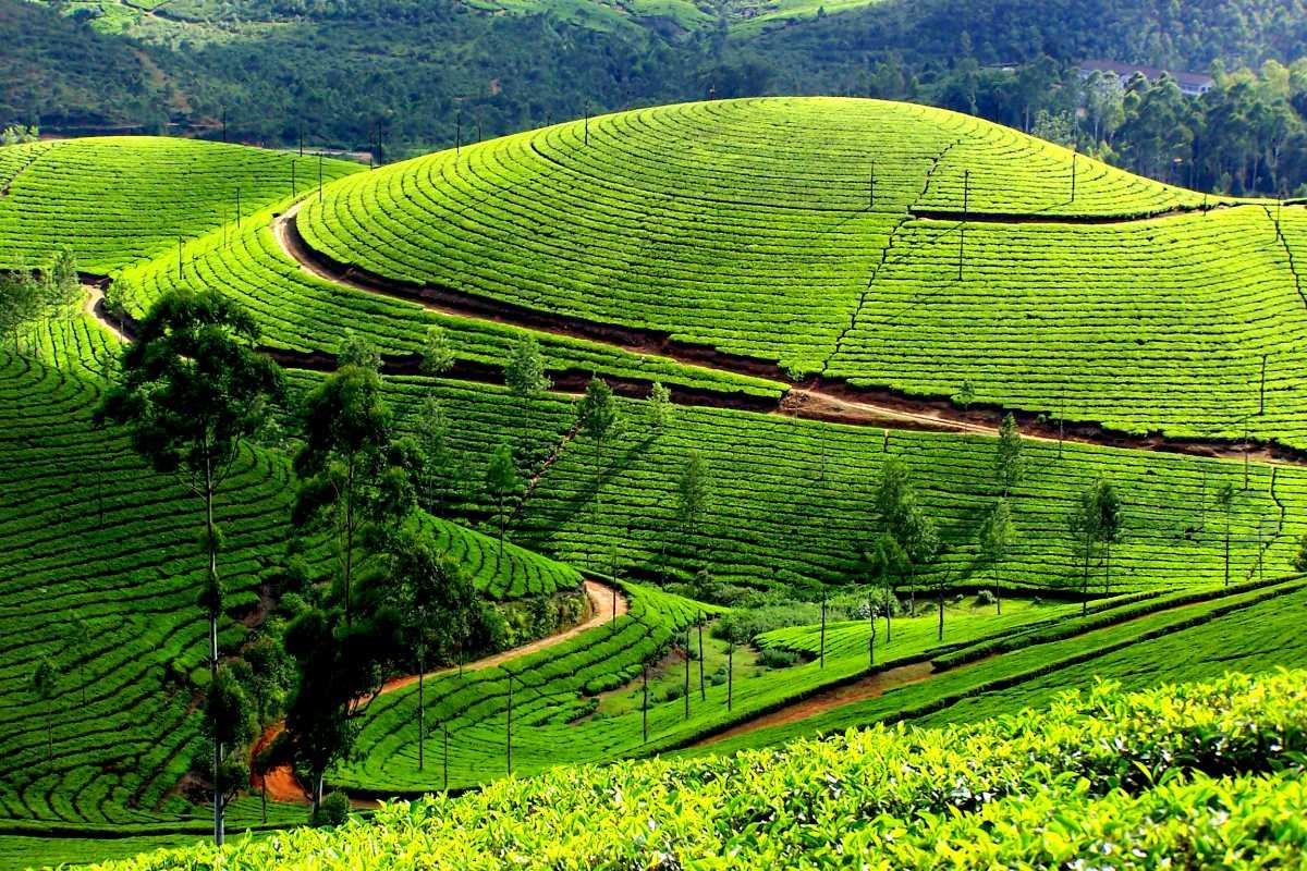 Chennai Express, Munnar Tea Plantations