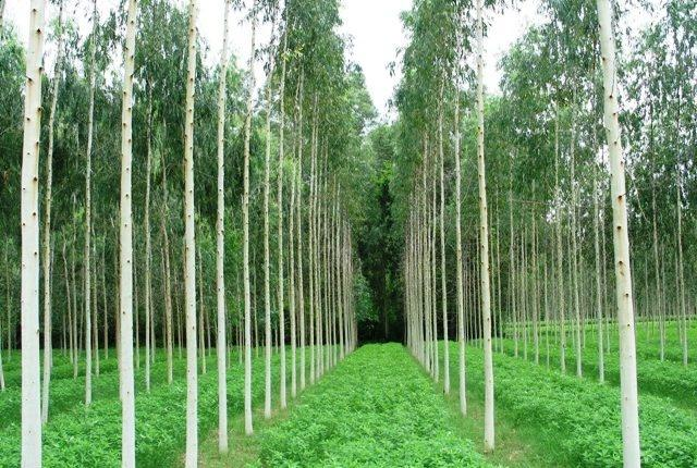 A plantation in Odisha
