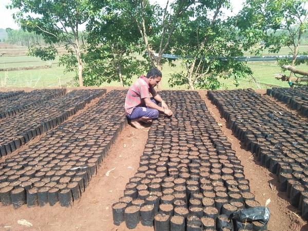 Man taking care of seedlings
