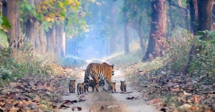 भारत का 2018 टाइगर सेंसस दुनिया के सबसे बड़े ऑन-कैमरा वन्यजीव सर्वेक्षण के लिए गिनीज बुक ऑफ वर्ल्ड रिकॉर्ड में दर्ज किया गया है।
