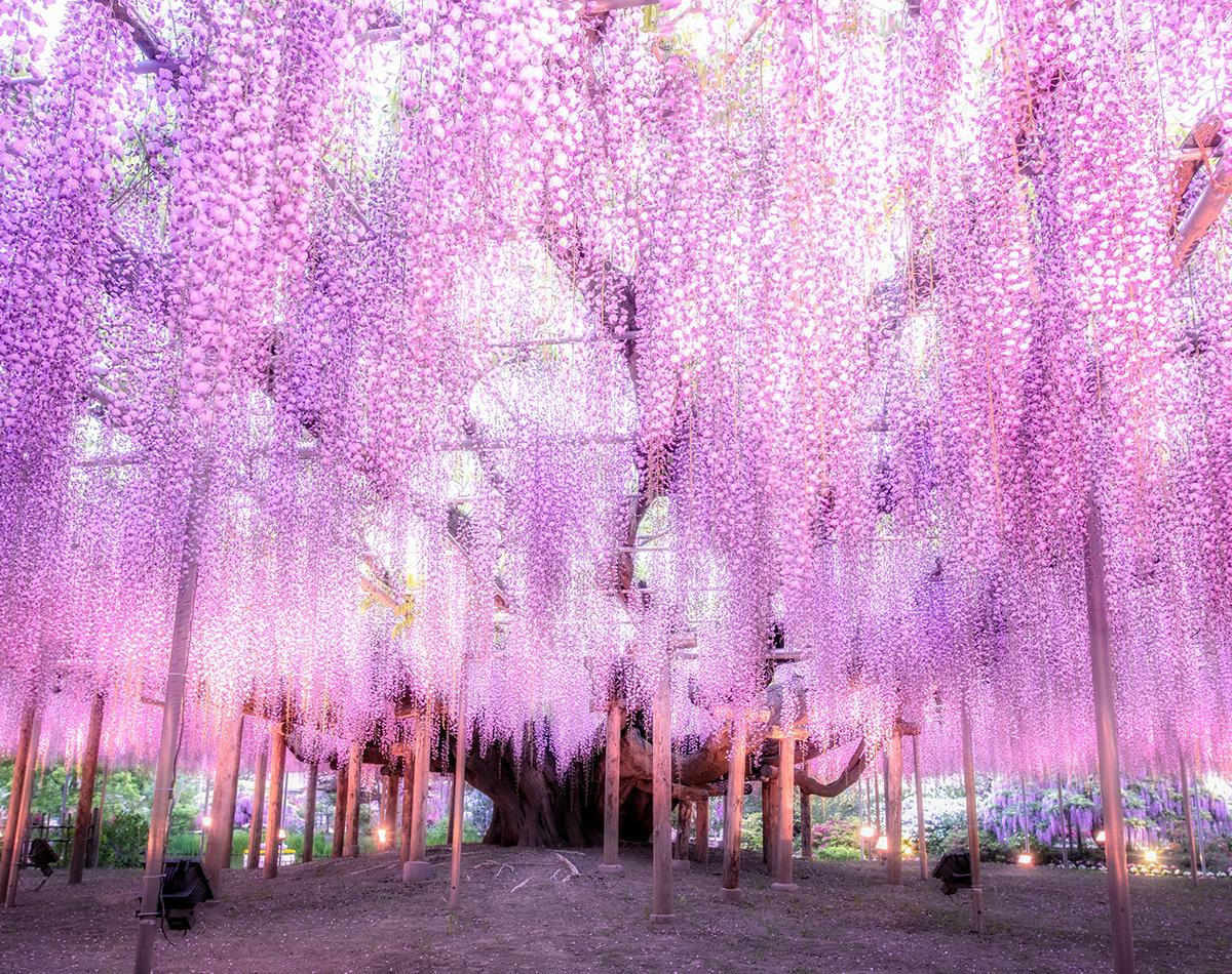 Tree Tree-Of-Souls In Avatar