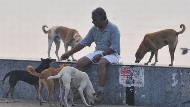 Stray animals feeding