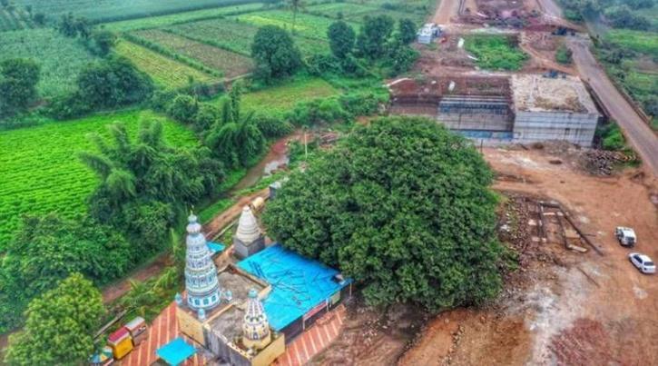 400 Year old banyan tree