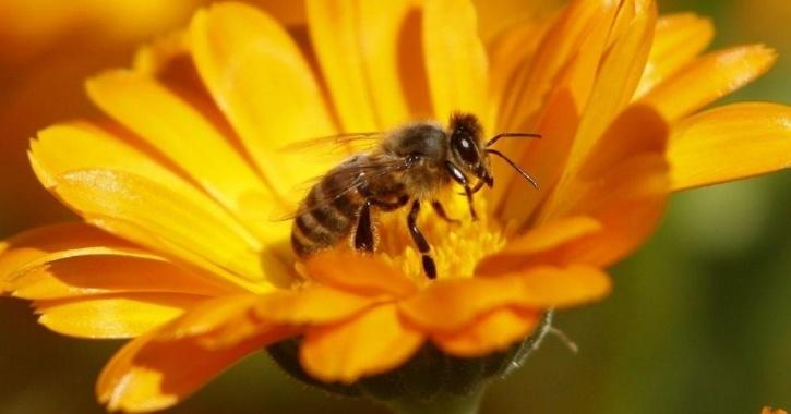 Ban On Bee-Harming Pesticides By France Now Backed By European Top Court