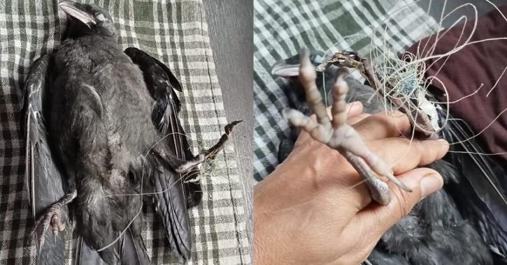 bird trapped in kite string