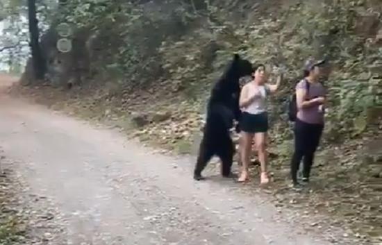 bear with girl