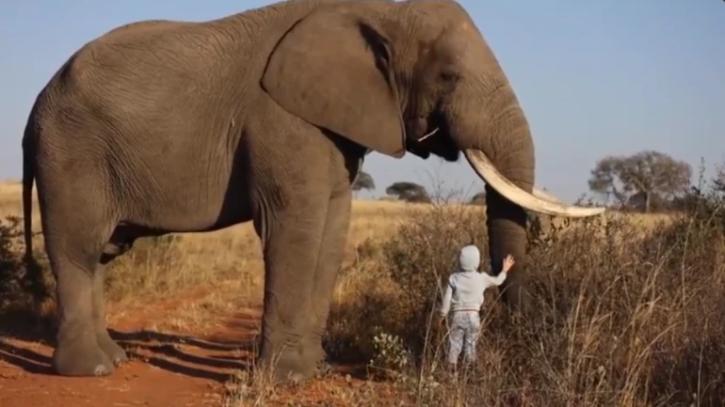Calm elephant