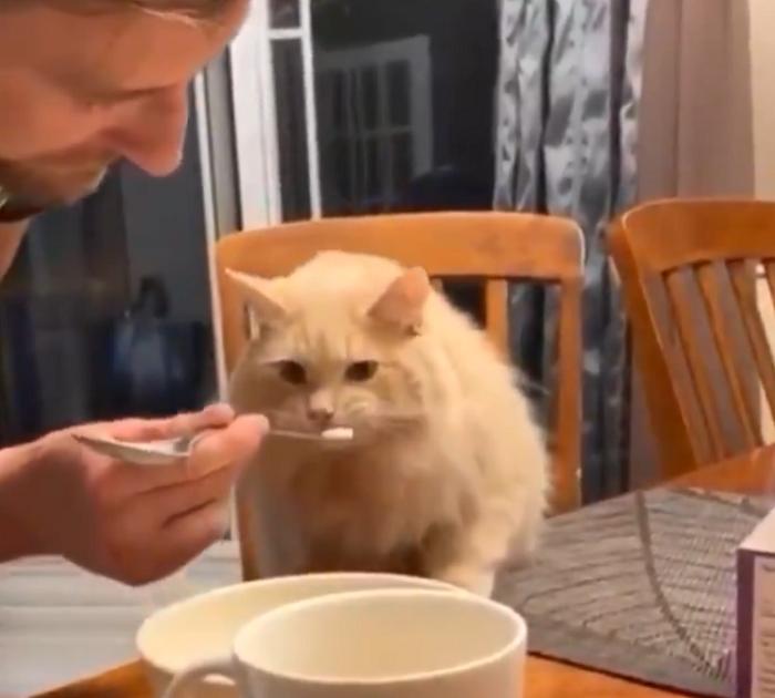 cat eating ice cream