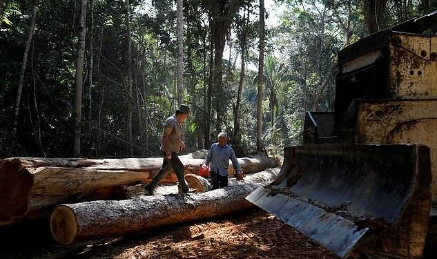 trees being cut for wood