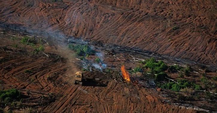 deforestation on earth