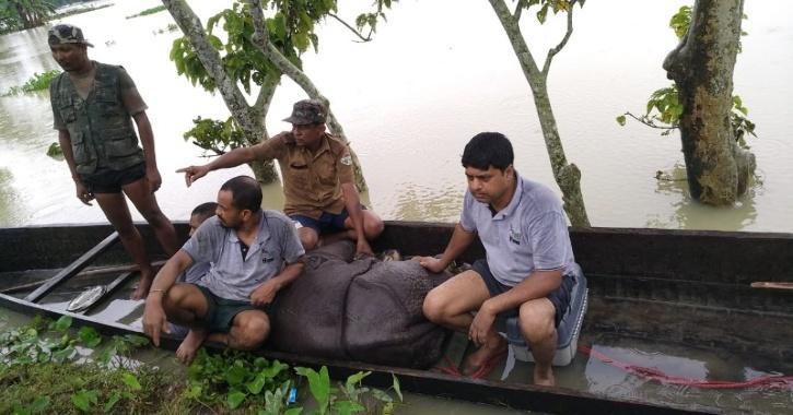 rhino floods