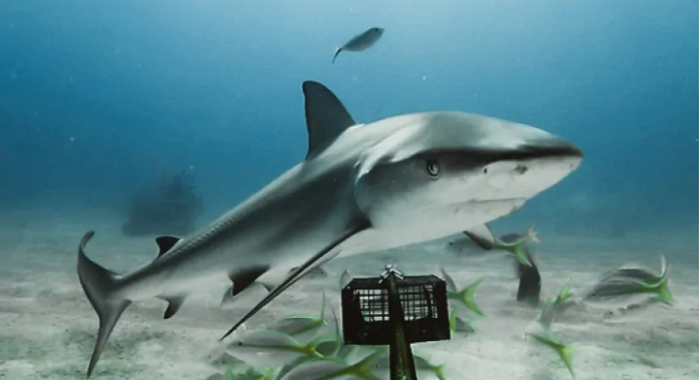 sharks in coral reef