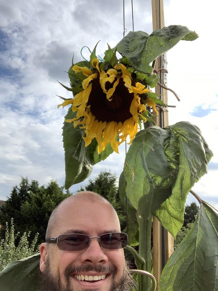 Sunflower tall as house