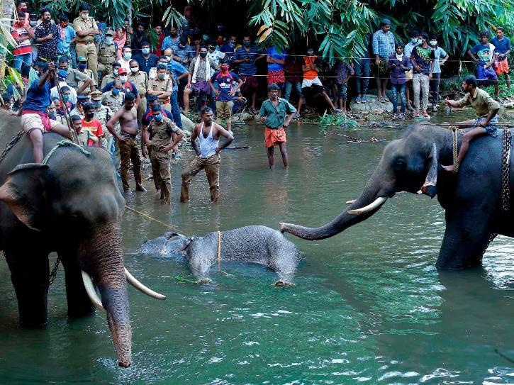 Elephant's Brutal Killing Sparks Outrage