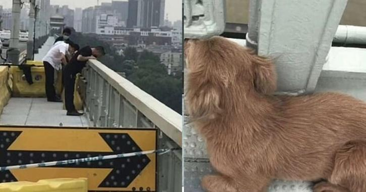 Dog Waits For Owner