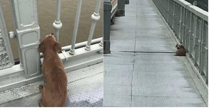 China dog waits for owner