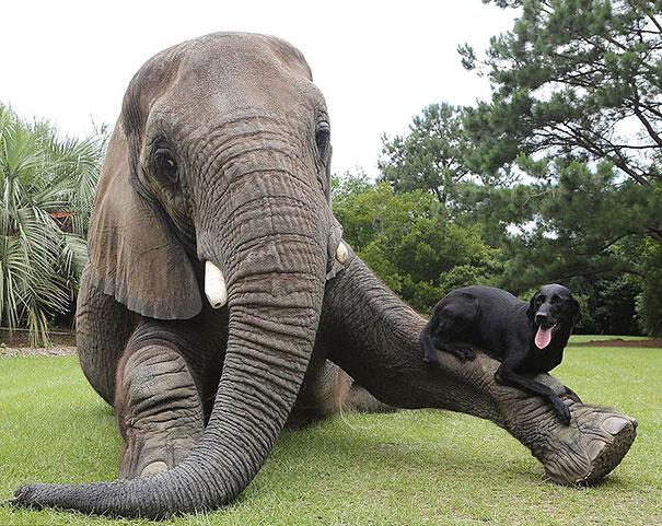 Elephant and dog as friends