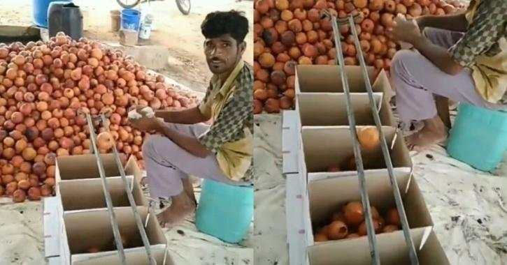 Fruit vendor jugaad to sort fruit