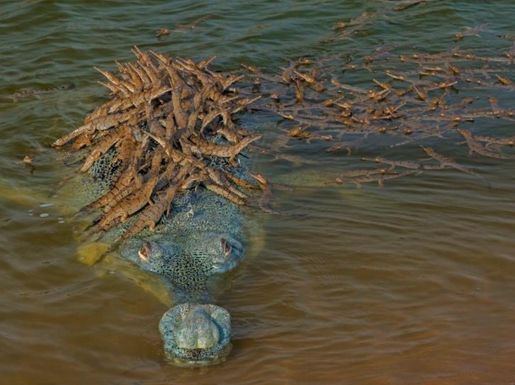 gharial-father-5ee9e35a5e0c5