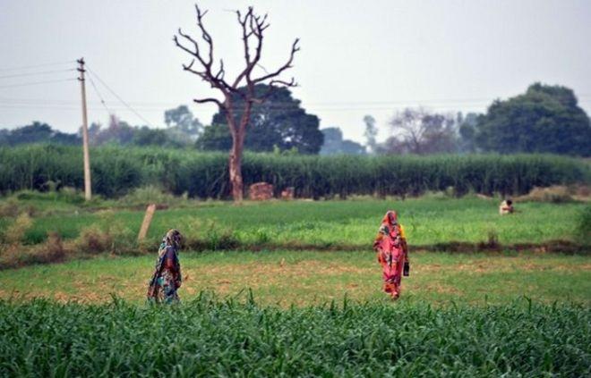 Women going to a field