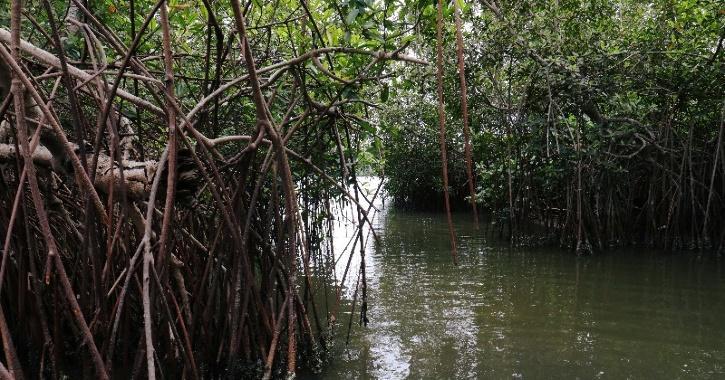 Mangrove Study, Global Warming, Environment Impact, Carbon Emissions, World Environment, Environment News
