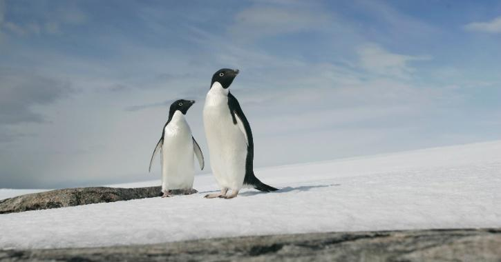 Penguins, Antarctic Ice Caps, Global Warming, Climate Change, Melting Ice Caps, Seal Level Rise, Technology News, Science News