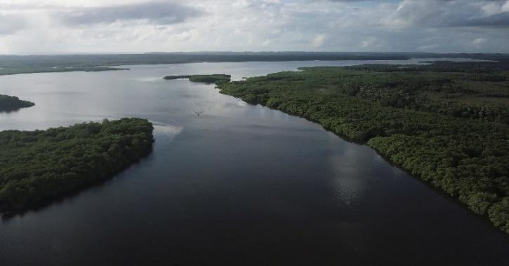 mangrove forests on the Caratingui river in Cairu, state of Bahia, Brazil
