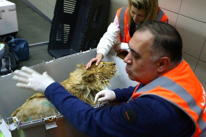 Simba during rescue