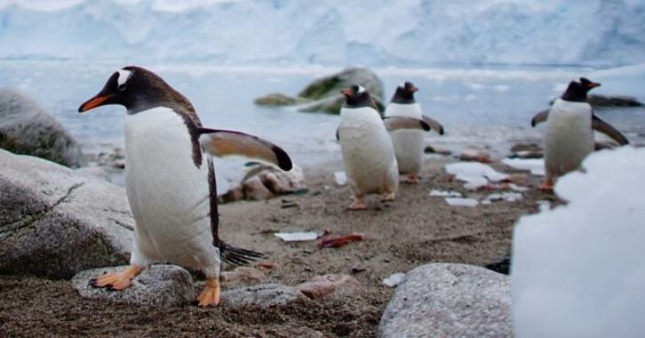 Penguins melting ice antarctica