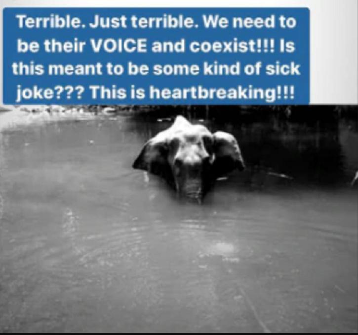 Heartbroken Bollywood Celebs Mourn Elephant That Ate Cracker-Filled Fruit, Demand Stricter Laws