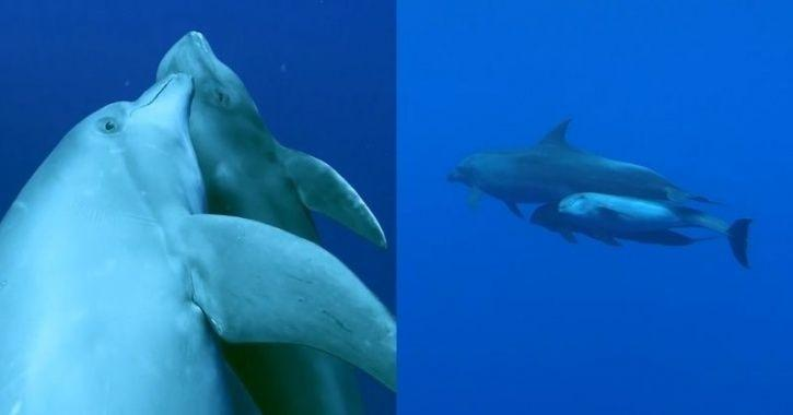 Dolphin adopts baby whale