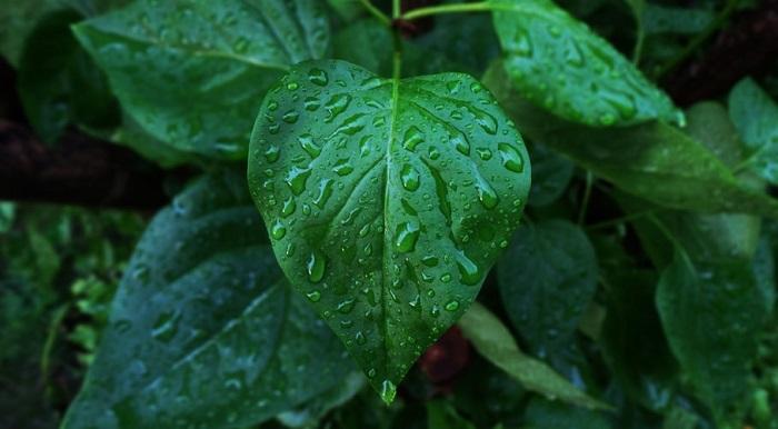Terrestrial plant